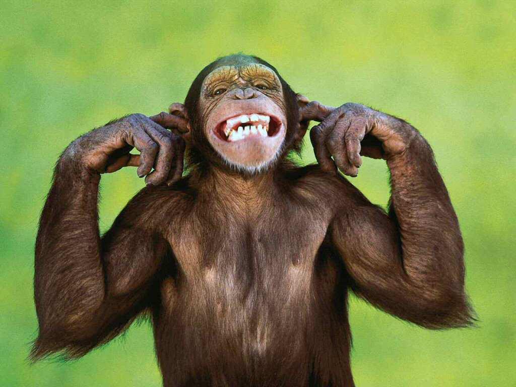 Pic Monkey
